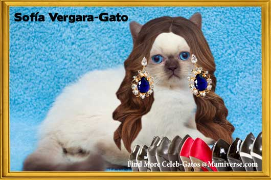 Sofía Vergara-Gato Delivers the Goods!-MainPhoto