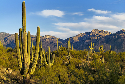 10 Fun Things for the Whole Family in Tucson Arizona-Photo2