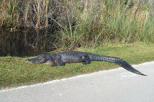12 Reason to Avoid Florida in Winter-Photo4