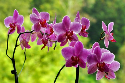 orchid facts