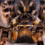 Creeping Along the Amazon Tarantula Trail-SliderPhoto