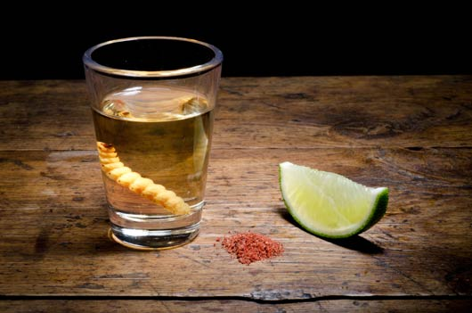 15 Weird Facts About Tequila You Never Knew-MainPhoto
