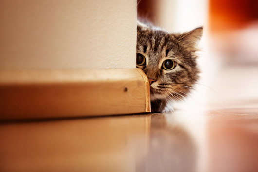 20 cat virtues that dog people should know-Photo6