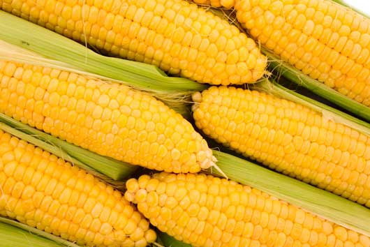how to cook indian corn on the cob