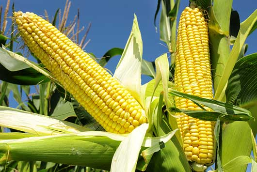Do-I-Make-You-Corny--9-New-Ways-to-Make-Corn-on-the-Cob-MainPhoto