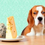 15 Foods to Keep Away from your Dog-MainPhoto