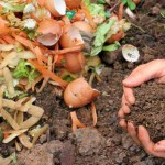 14-Reasons-why-Everyone-Should-Learn-to-Compost-MainPhoto