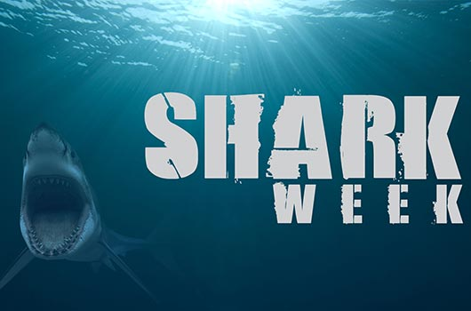 12-Reasons-Why-Shark-Week-is-Better-than-Sex-MainPhoto