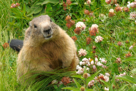 Groundhog-Day-History-Facts-Why-Does-it-Matter-Again-photo2