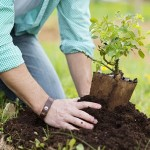 10-Key-Things-to-Know-About-Planting-a-Fruit-Tree-MainPhoto