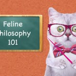 Feline-Philosophy-15-Lessons-You-Can-Only-Learn-from-a-Cat-MainPhoto