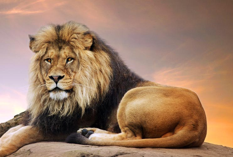 What you need to know about dating a leo