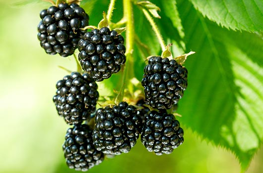 Berry-Ready-10-Blackberries-Recipes-to-Try-this-Fall-MainPhoto