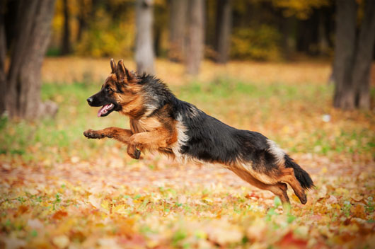 Breed-Browsing-How-to-Choose-Kinds-of-Dog-for-Your-Family-Photo3