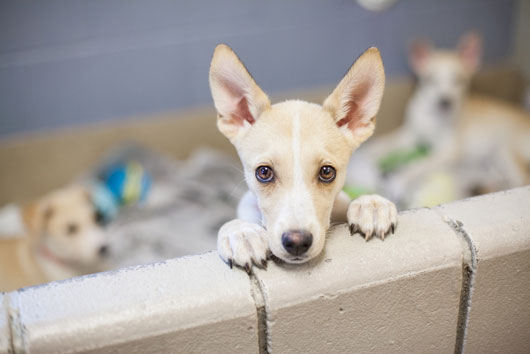 Breed-Browsing-How-to-Choose-Kinds-of-Dog-for-Your-Family-Photo4