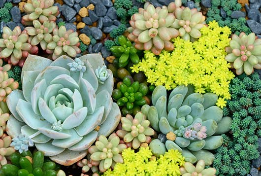 In-Praise-of-the-Prickly-How-to-Grow-&-Care-for-Succulent-Plants-MainPhoto