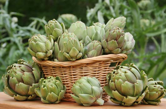 Chef-Talk-How-to-Make-Artichokes-Like-a-Pro-MainPhoto