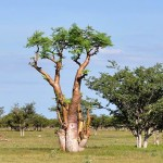 8-Reasons-Why-Everyone-is-Talking-About-the-Moringa-Tree-MainPhoto