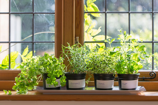 How-to-Grow-an-Indoor-Herb-Garden-You'll-Actually-Use-Photo3
