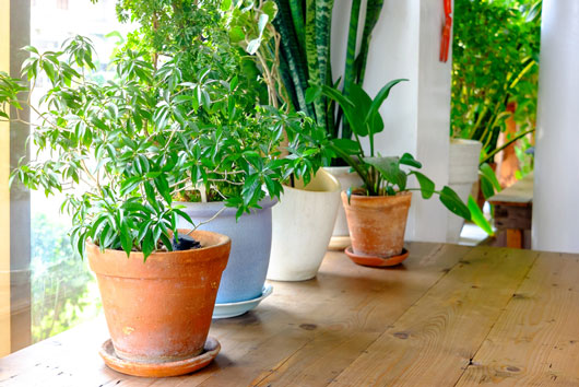 How-to-Grow-an-Indoor-Herb-Garden-You'll-Actually-Use-Photo2