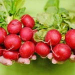 How-to-Make-Your-Radish-Recipes-Fancy-MainPhoto
