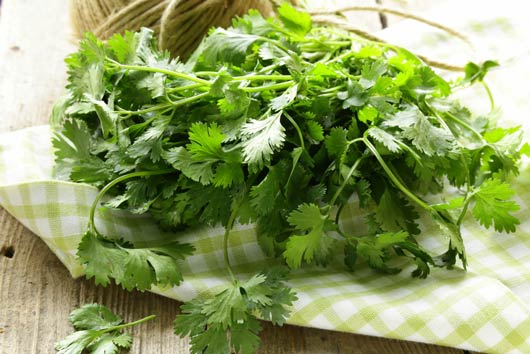 The-Fresh-Cilantro-Enigma-Why-do-Some-People-Hate-it-MainPhoto