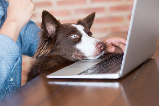 13-Reasons-to-Celebrate-Bring-Your-Dog-to-Work-Day-Photo3