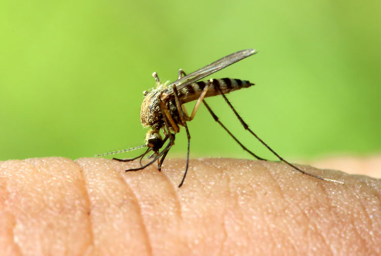Bugging-Out-10-Mosquito-Types-You-Want-to-Avoid-MainPhoto
