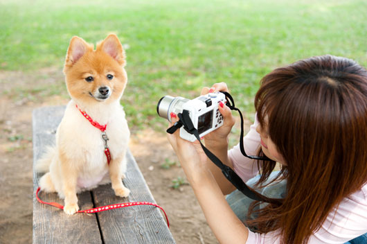 Pet-Photography-101-Take-Your-Pet's-Portrait-Like-a-Total-Boss-Photo2